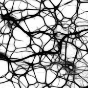 neuromelanin human frequencies