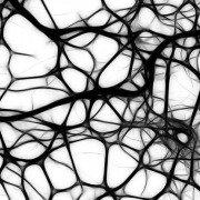 Neuromelanina