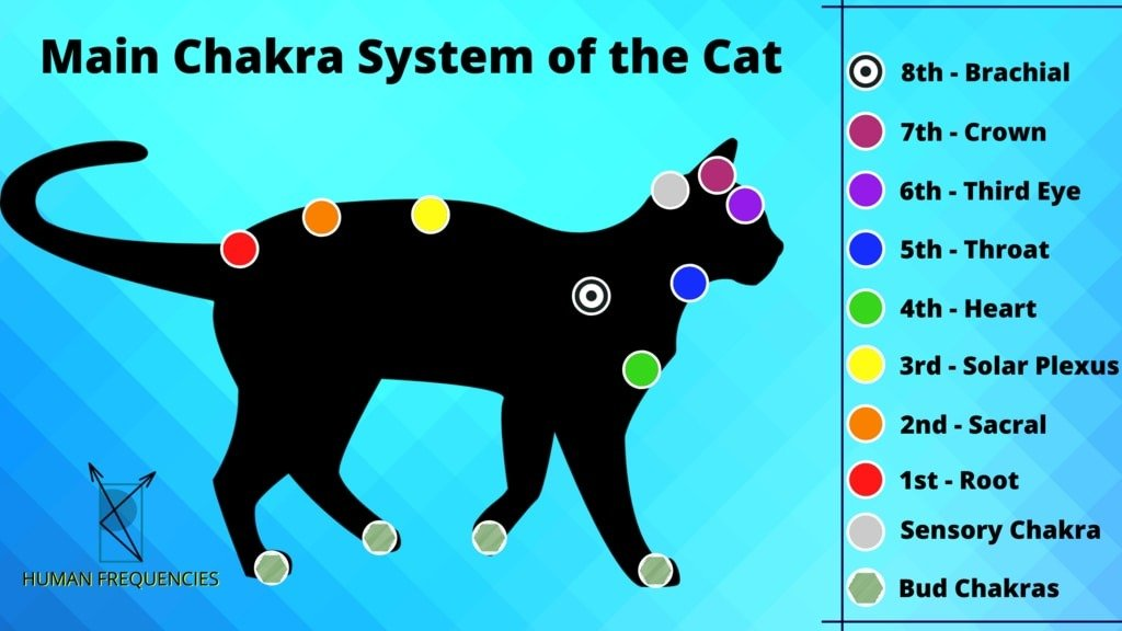 Energy Anatomy of the Cat. Chakras of the Cat