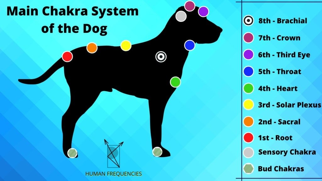 Energy Anatomy of Dogs. Dogs Chakras