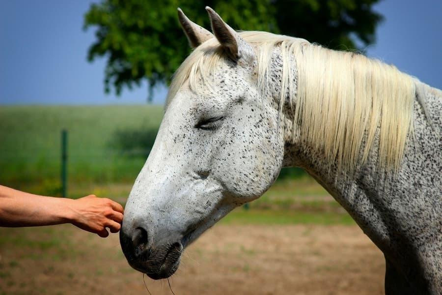 Reiki for Animals Horse