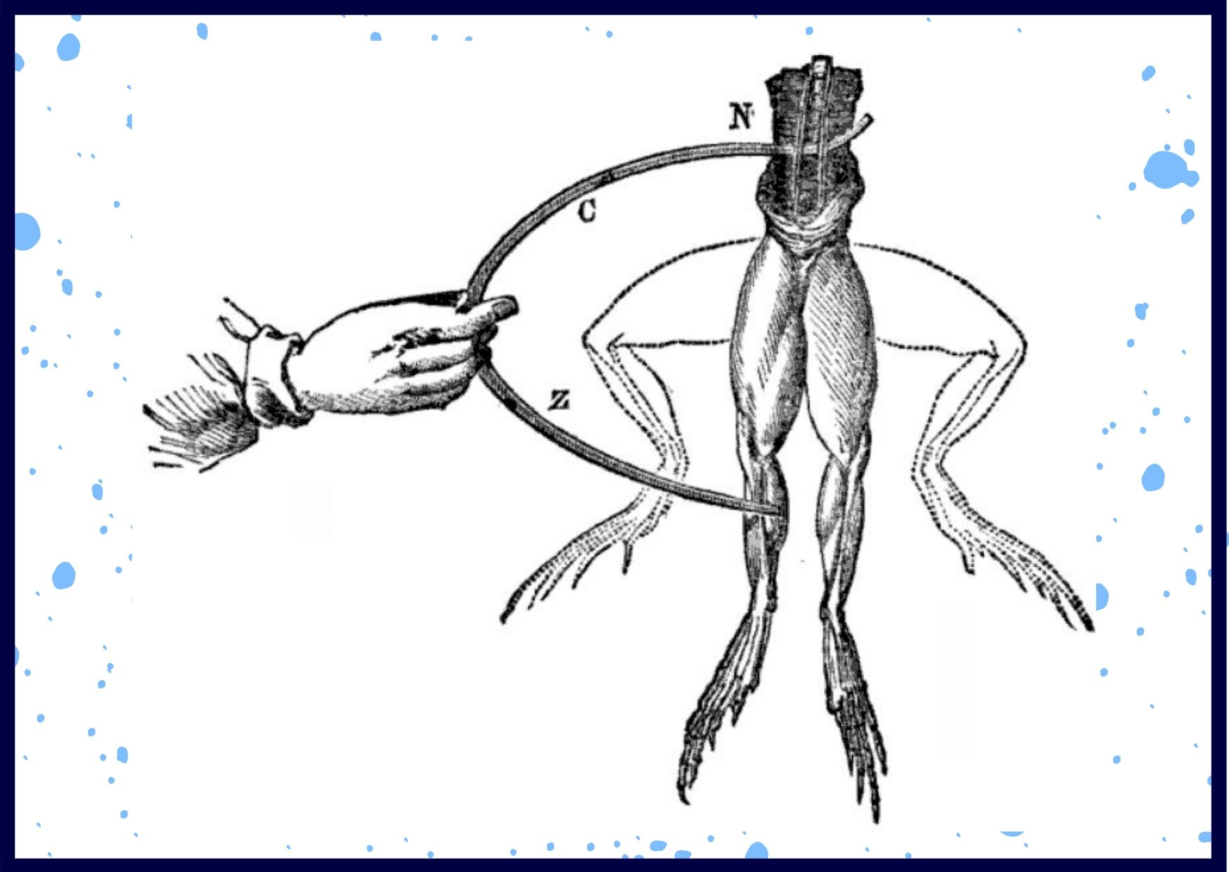 Galvani's illustration of his famous experiment
